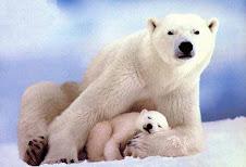 El Oso polar está en peligro de extinción.