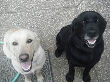 Sunny and Magic (a.k.a. Bad Dog and Good Dog)