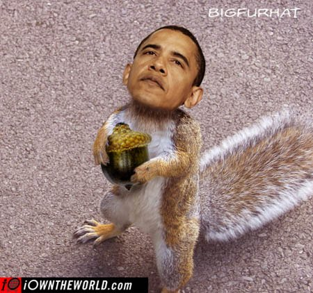 [obama+squirrel+acorn]