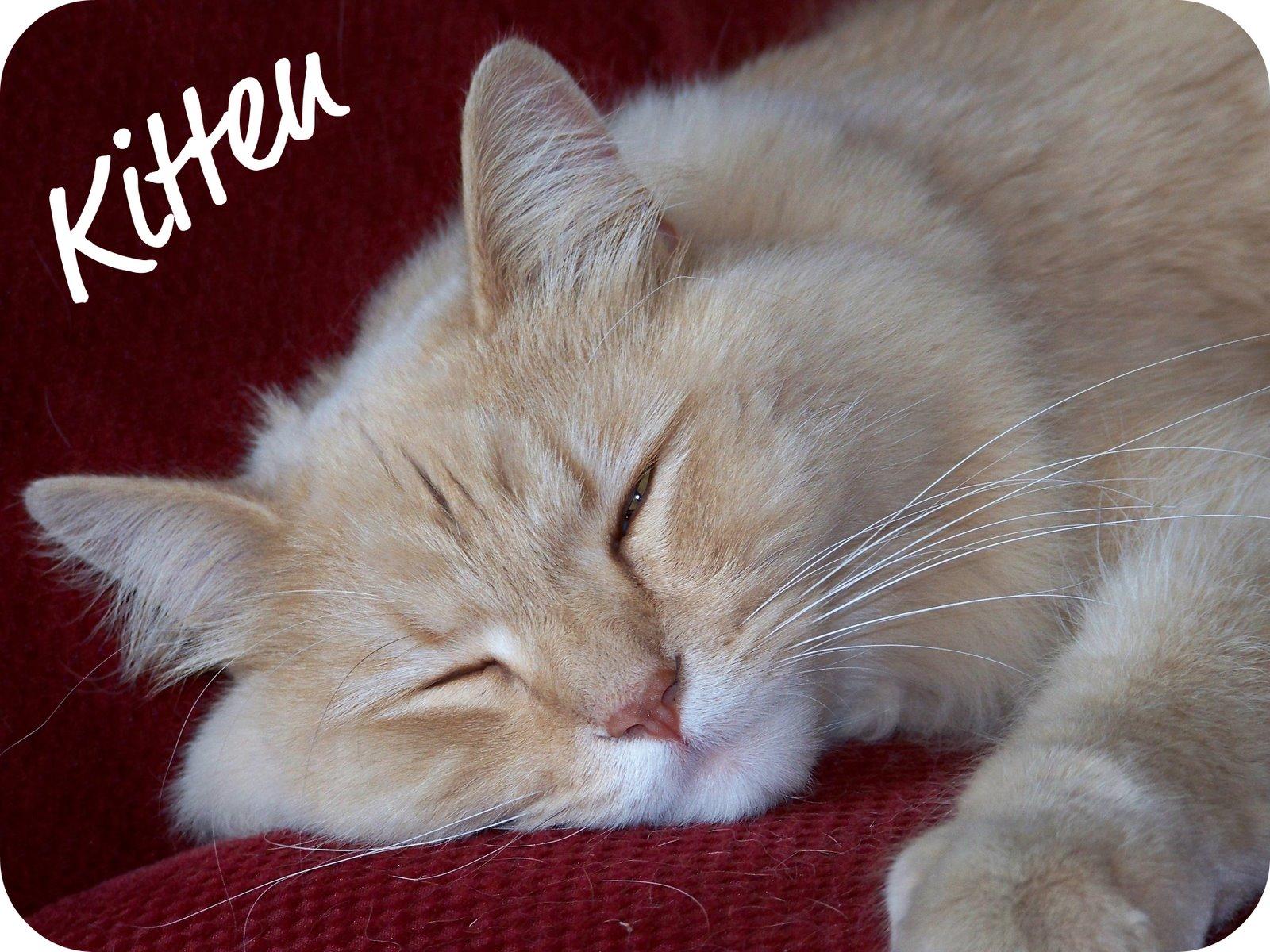 [kitten.jpg]