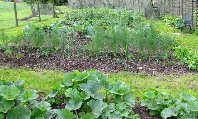 Vegetables growing in garden.