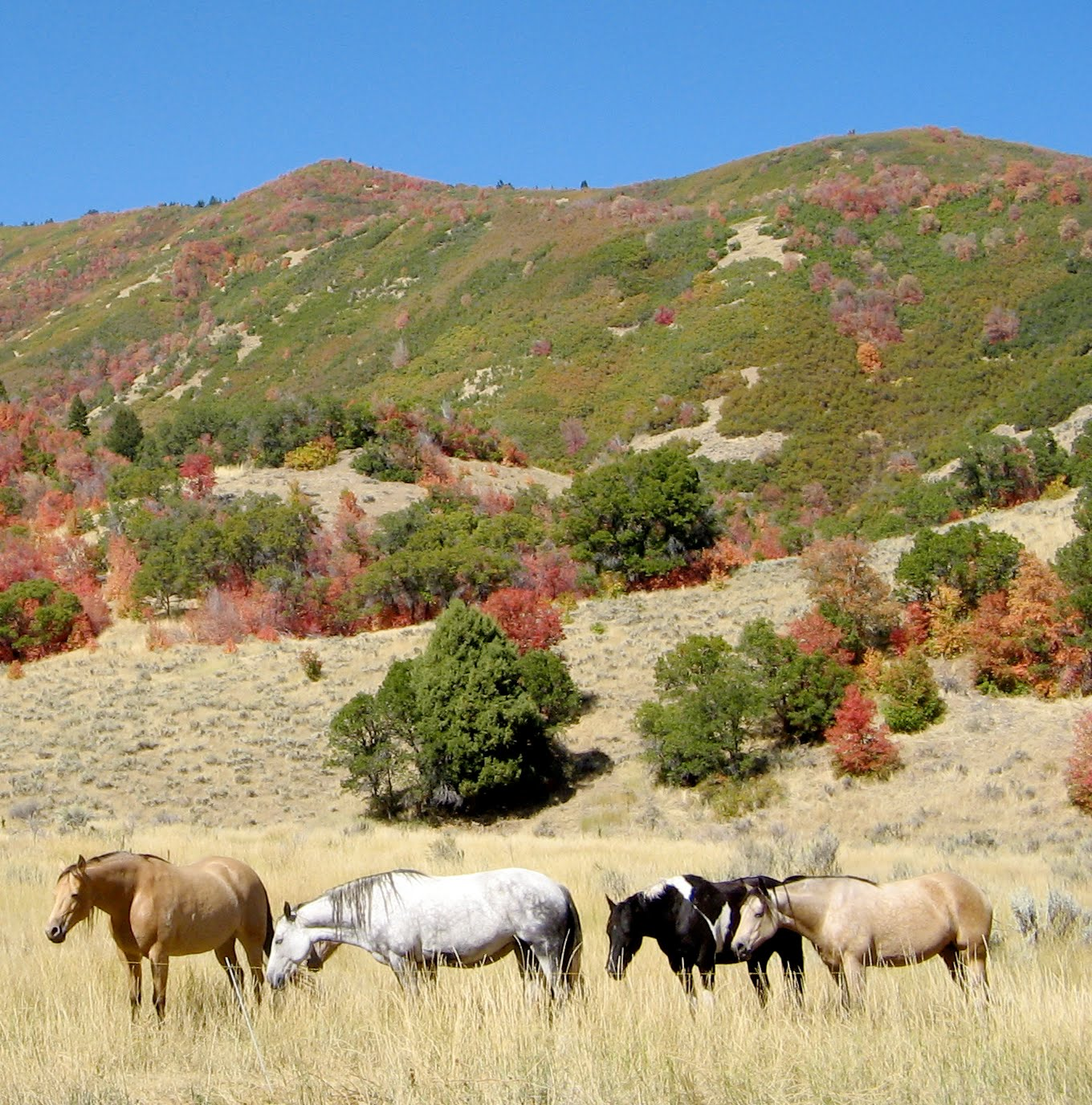 [mares+bred+to+Dallas+2009]