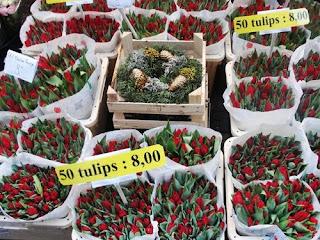 Tulipas cultivo, cuidados e cidade das tulipas