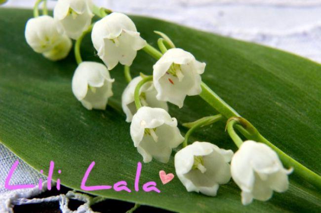 Lili Lala