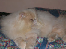 Zissura Prince Adonis