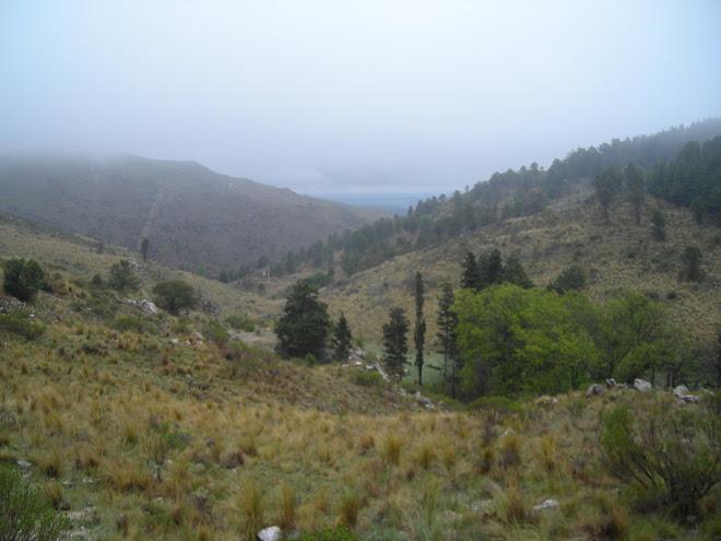 Bosque Alegre (camino al observatorio, vista)
