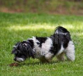how to break down dog poop in yard