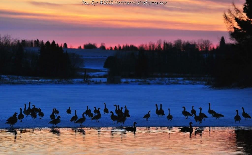 Northern Maine Birds: Northern Maine Birds, March 2010