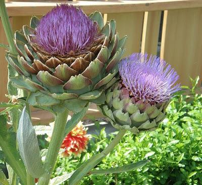artichoke+flower.jpg
