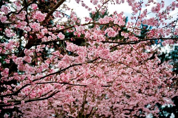 Loisirs parc oriental maul vrier jardin japonais for Le jardin oriental