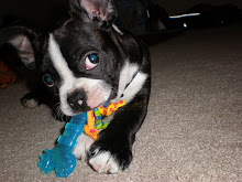 My lil man Remy likes to play too!