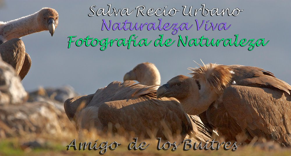 Salvador Recio. Fotografia de Naturaleza