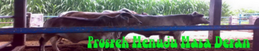 Integrasi Perkebunan Kelapa Sawit Dan Peternakan Sapi