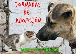 JORNADAS DE ADOPCIÓN