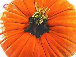 Pumpkin, by Jay Gross