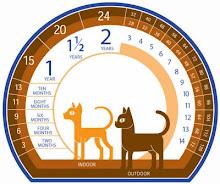 Calculadora de edad Felina