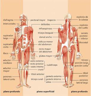 revisión masaje baile