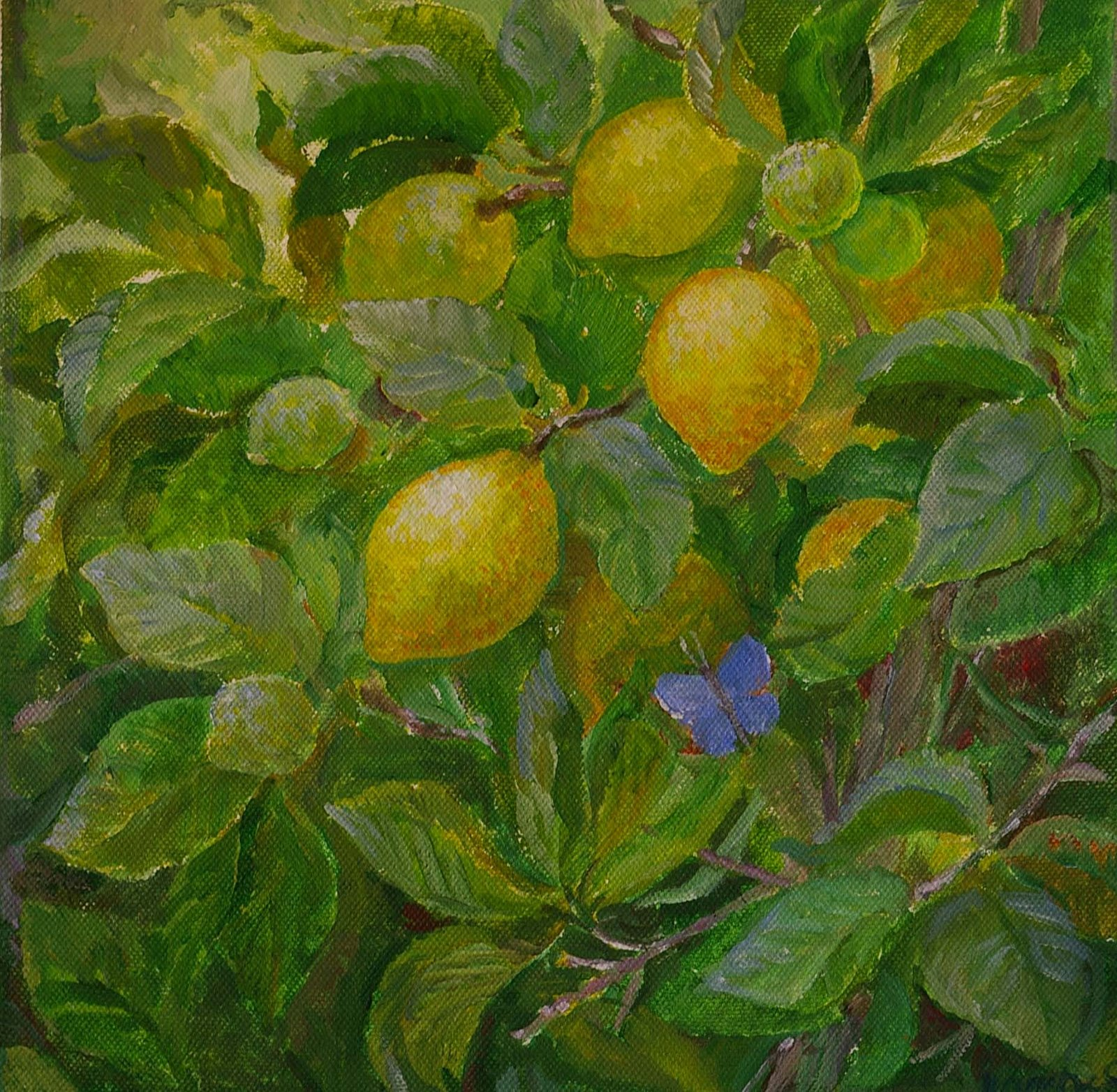 [citroner+30.30]