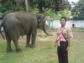 2. Kebun Binatang