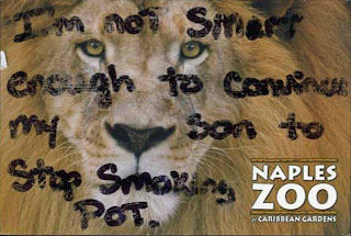 Drugs make lions cry