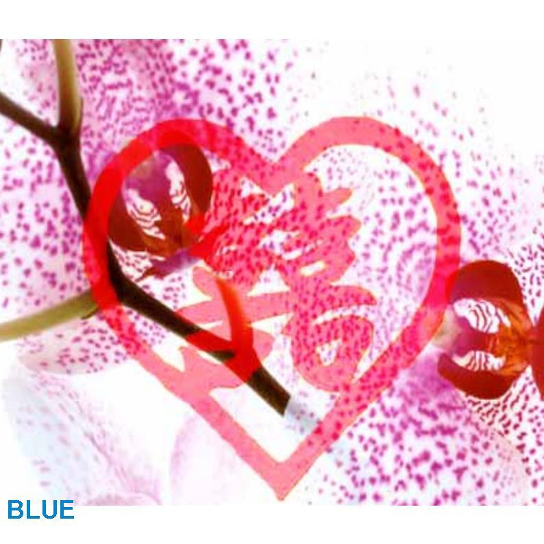 Tips c mo armonizar el amor con feng shui for Tecnica del feng shui