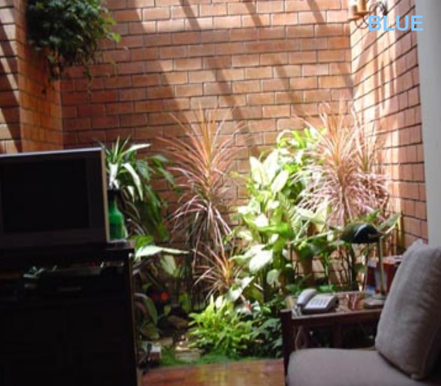 C mo elegir un lugar para plantas de interior - Plantas para interior de casa ...