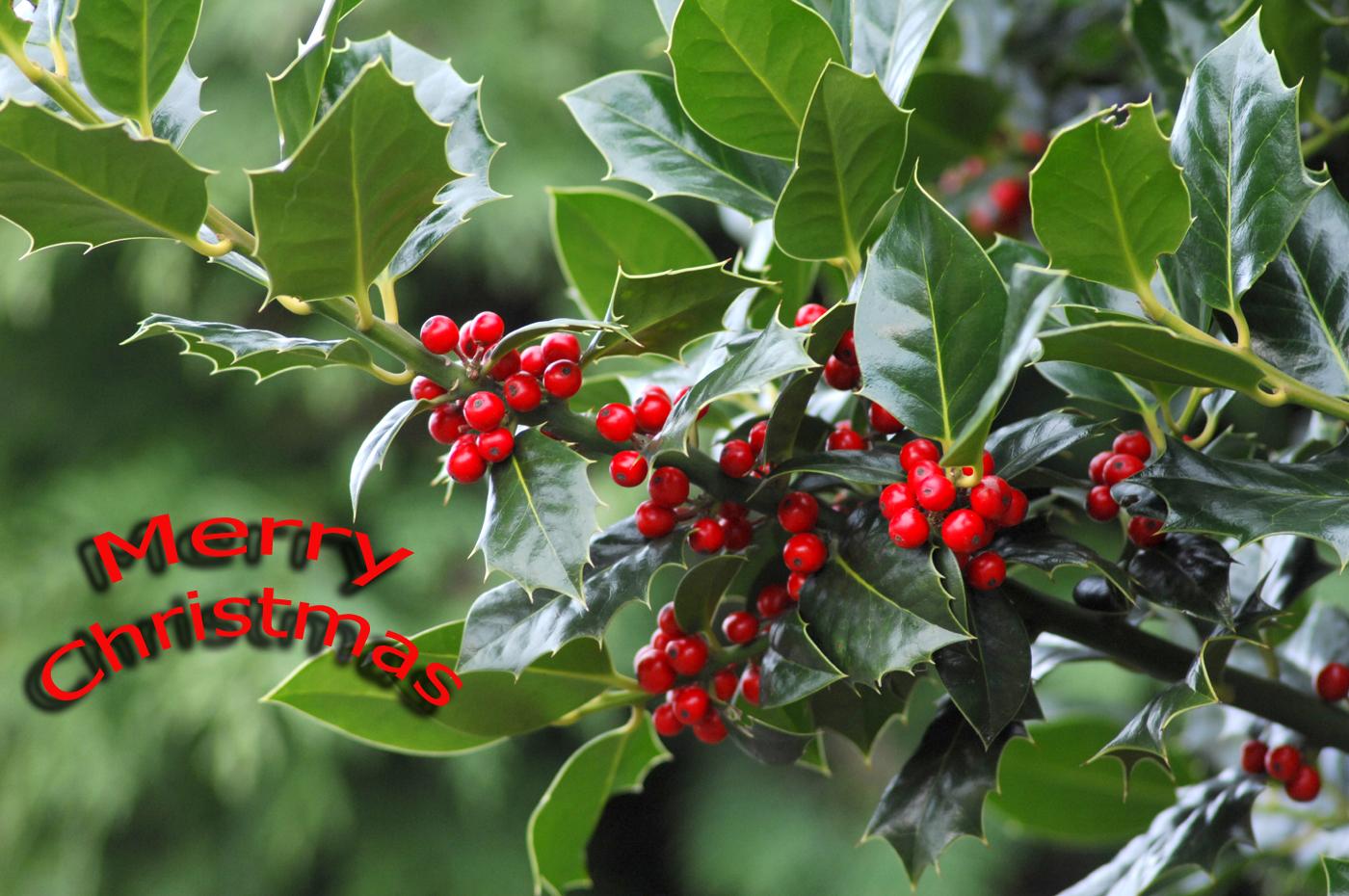 http://4.bp.blogspot.com/_7F-jRfYZc6A/R1LuKZgKPAI/AAAAAAAABjs/x2Dfj8UE5Cw/s1600-R/Happy+Christmas.jpg