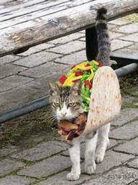 I Hate Cats: How ro identify a Mexican Cat