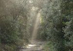El Parc del Foix