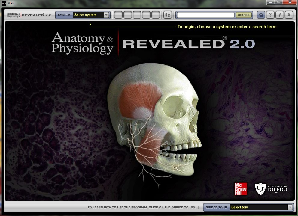 Anatomy revealed 30