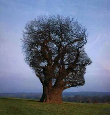 Funny Nature ..........MUST SEE :)) image gallery