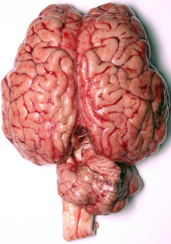 human body videos: Human Brain Diagram And Functions