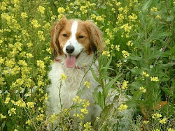 Jasper 12 jaar geworden