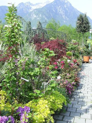 meilleurs arbustes de jardin arbustes feuillage d coratif et arbustes persistants les. Black Bedroom Furniture Sets. Home Design Ideas