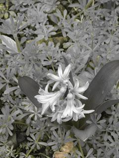 The garden of the colour blind photos