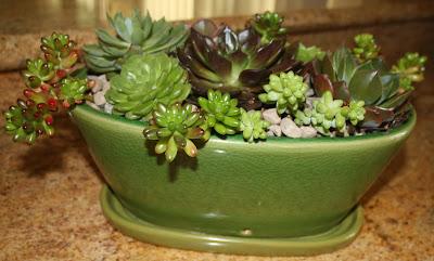 Make A Succulent Dish Garden At Wylde Center: Wednesday, August 28, 2013