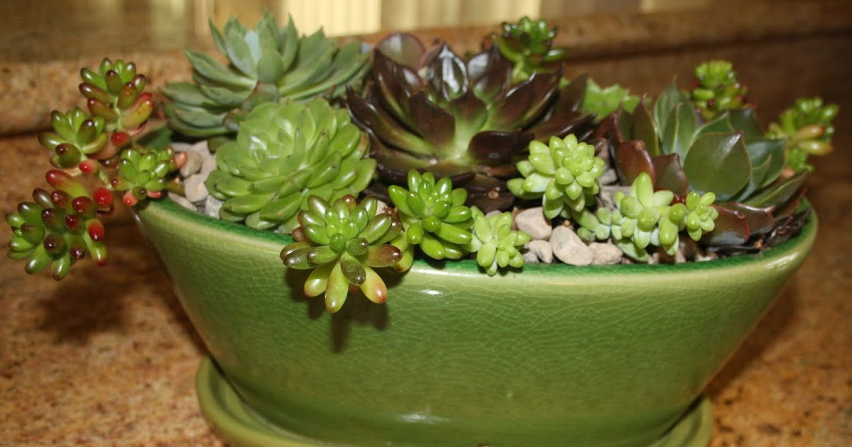 how to make a succulent garden dish