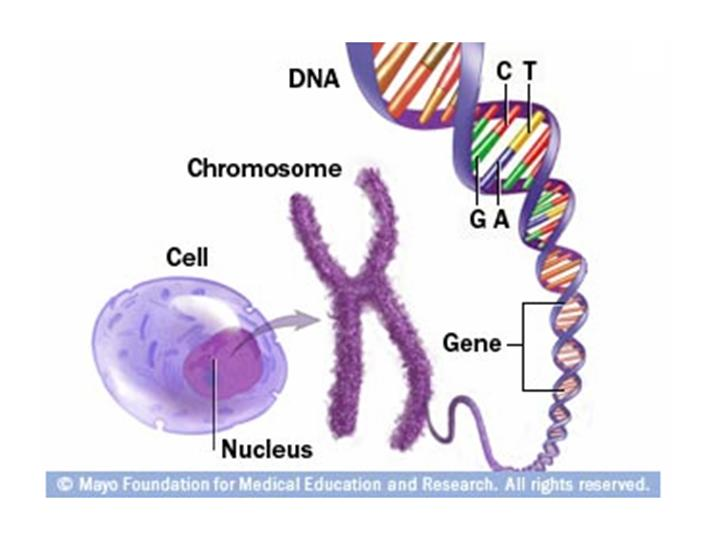 chromosome and dna relationship