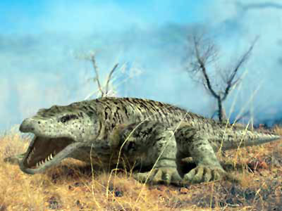 Megalania vs marsupial lion - photo#15