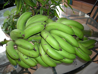 Bananas, La Ceiba, Honduras