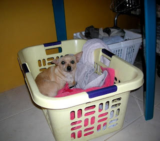 Zoe in the laundry basket
