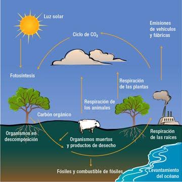 ciclos de la materia: CICLOS BIOGEOQUÍMICOS