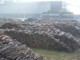 biomass, woody biomass, pine beetle