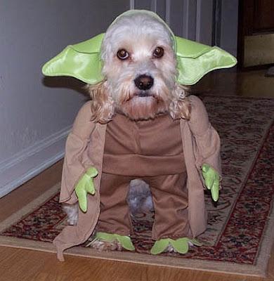 Cachorro fantasiado de Yoda, o Jedi de Star Wars