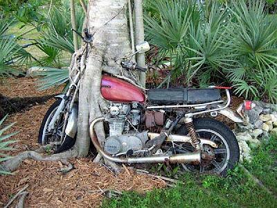 Imagem fotografica com motocicleta honda envolvida pelo tronco de uma árvore que cresceu em seu entorno.
