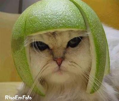 Gato, nada feliz, usando um capacete feito da casca de uma laranja.