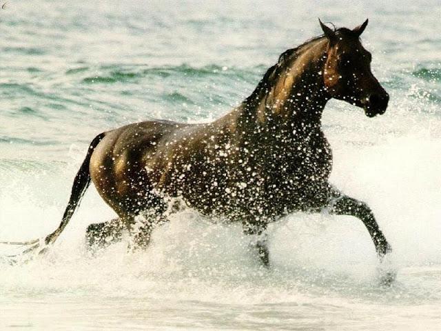 cavalo ingles