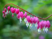 Flores Bonitas: coração partido