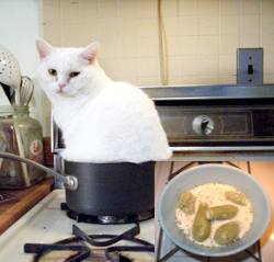 Cats Rice Cooker Gif