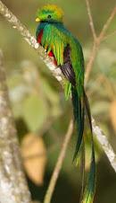 México puede presumir de diversidad animal y vegetal...